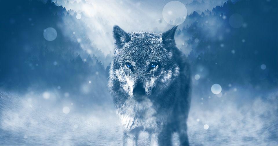 Mit tattoo frau bedeutung wolfskopf ▷ 150